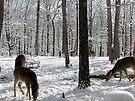 Five doe's enjoying this mornings sunshine 02 09 2010 by NatureGreeting Cards ©ccwri
