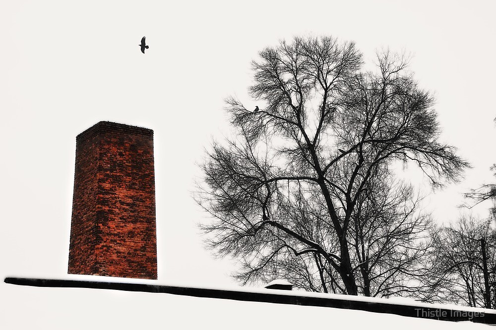 Escape by Thistle Images
