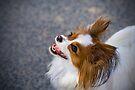Bright Eyed & Bushy Tailed by Helen Green