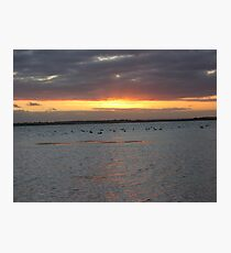 Black Swans on Lake Connewarre Photographic Print