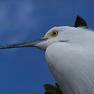 Tropical Bird by DianaTaylor/ JacksonDunes