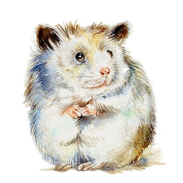 The small hamster by pambrosini