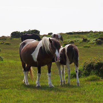 Bodmin Moor Ponies by lezvee