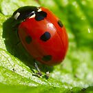 Ladybird Shine by EventHorizon
