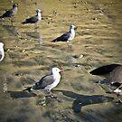 gulls by Bruce  Dickson
