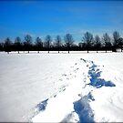 Snowpocalypse  by JamieLA