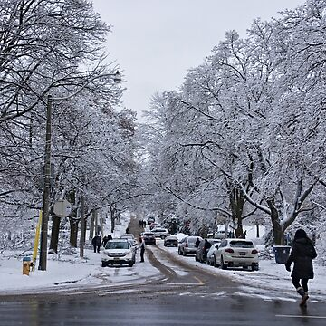After the Ice Storm--Beautiful But Destructive Ice and Snow by gerdagrice