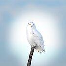 Heavenly Snowy Owl by Jim Cumming