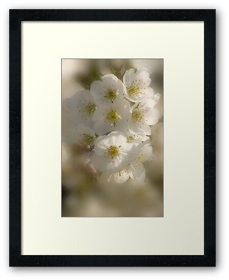Fragrance In White_2 by sundawg7