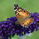 Fluttering Around by Bonnie Robert