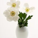 three white anemones in vase by OldaSimek