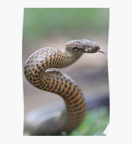 Golden Crowned Snake Poster