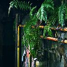 Ferns in abandoned hall by Lenka Vorackova