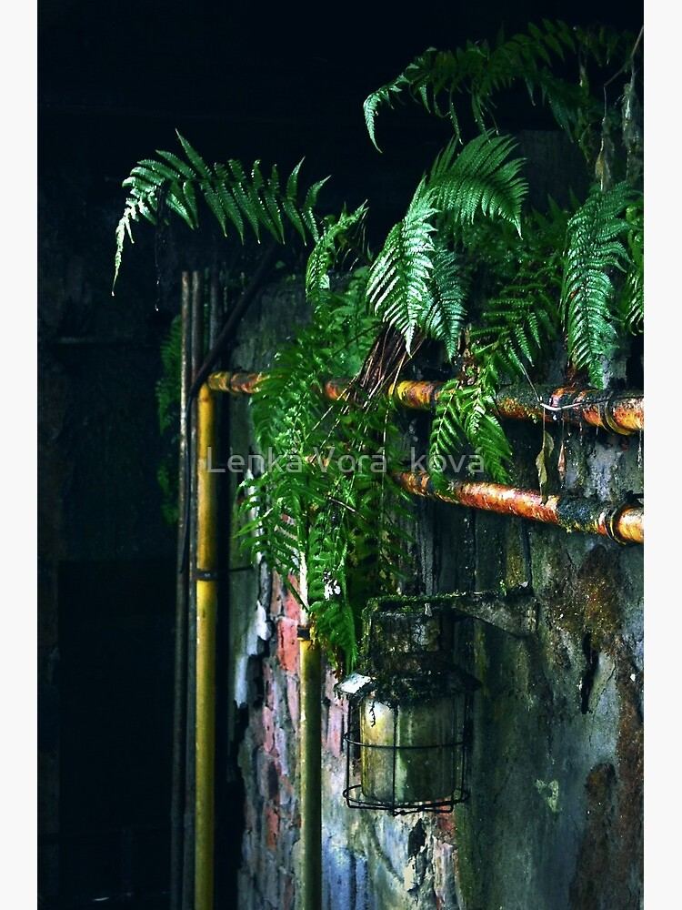 Ferns in abandoned hall by Trin4ever