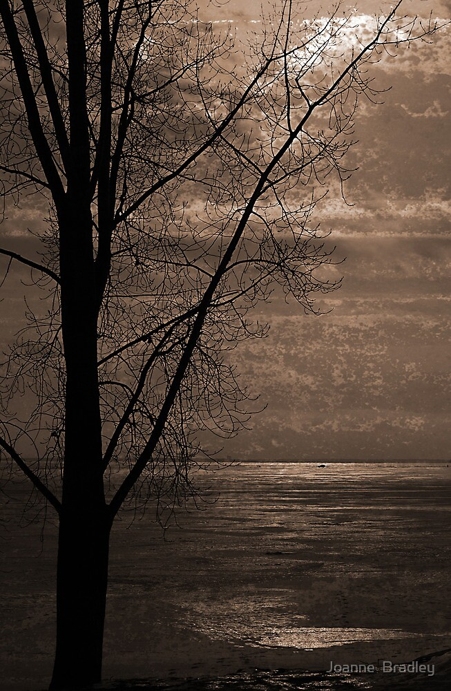 Winter Softly by Joanne  Bradley