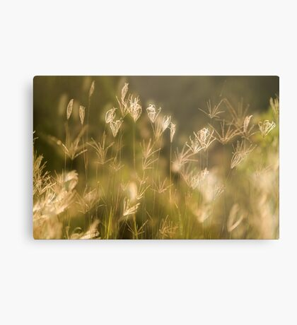 Whispers on the Wind Metal Print