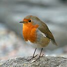 Robin by ChromaticTouch