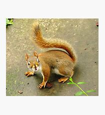 Scene From A Medieval Tapestry ~ With Red Squirrel Photographic Print