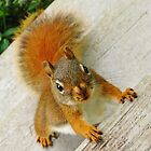 Just How Many Red Squirrels Does It Take To Drive You CRAZY? by artwhiz47