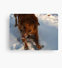 Snow Happy Canvas Print