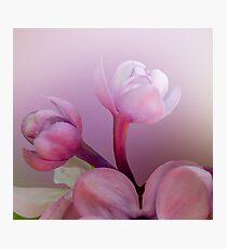 Lilac florets  Photographic Print