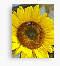 Dont Worry Bee happy! Canvas Print