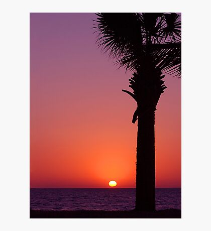 Sunset Palm Photographic Print