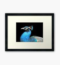 Indian Peacock Framed Print