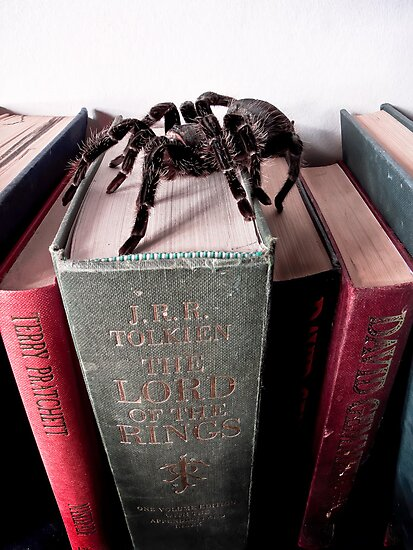 Pain the Spider on the Move by Noel Taylor