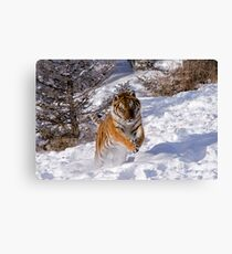 I'm Coming for You! Canvas Print