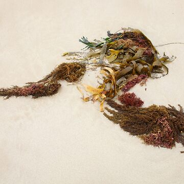 Seashore Ikebana 8 by beeden