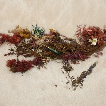 Seashore Ikebana 9 by beeden