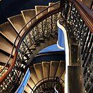Downstairs by STEPHANIE STENGEL | STELONATURE PHOTOGRAPHY