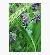 The Weight of the Bumblebee Photographic Print