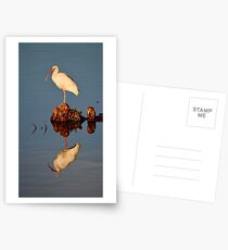 Ibis at the Golden Hour Postcards