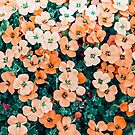 Floral Bliss #photography #nature by 83oranges