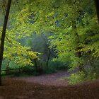Autumn Glory..... by Simon Brown