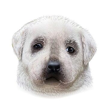 Labrador Puppy by alijun