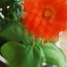 Wind series - Dancing orange by jwjanie