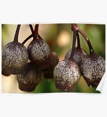 Gumnuts Poster