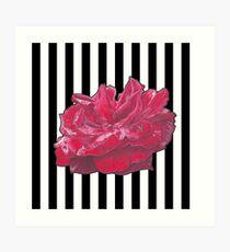 Red Rose On Stripes Art Print