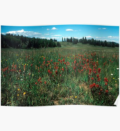Mountain Meadow in August Poster