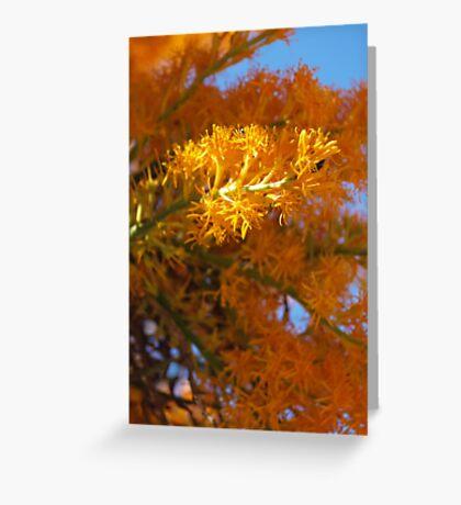 Nuytsia Blooming Greeting Card
