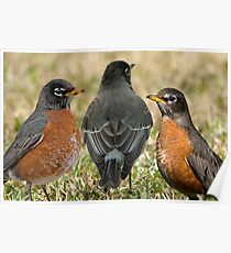 Stay, little cheerful Robin, stay! Poster