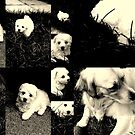 Wilmer Collage by PPPhotoArt