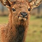 Bad Hair Day by Heather Haderly