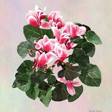 Red and White Cyclamen by SudaP0408