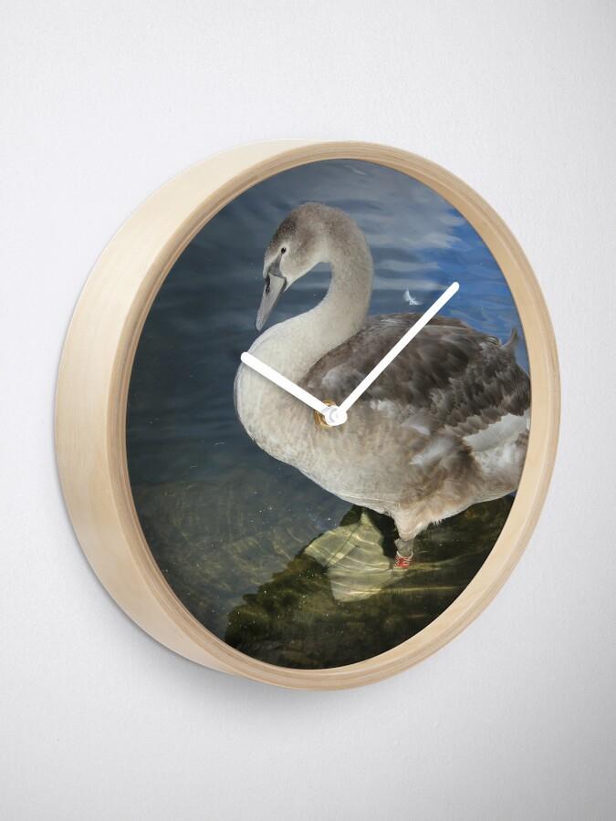 Alternative Ansicht von ihr Amtsrichter Schwan Uhr