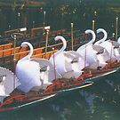 Swan Boats at Sunrise by OntheroadImage