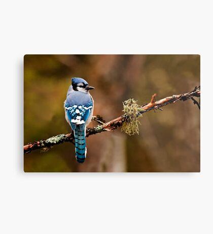 Blue Jay On Branch Metal Print